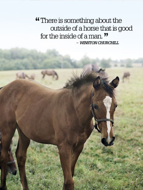 country quotes 8