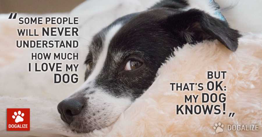 dog quotes 10