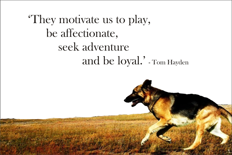 dog quotes 11
