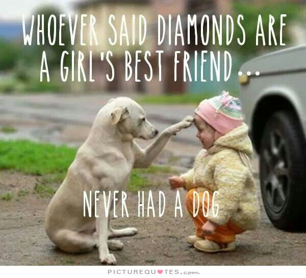 dog quotes 12