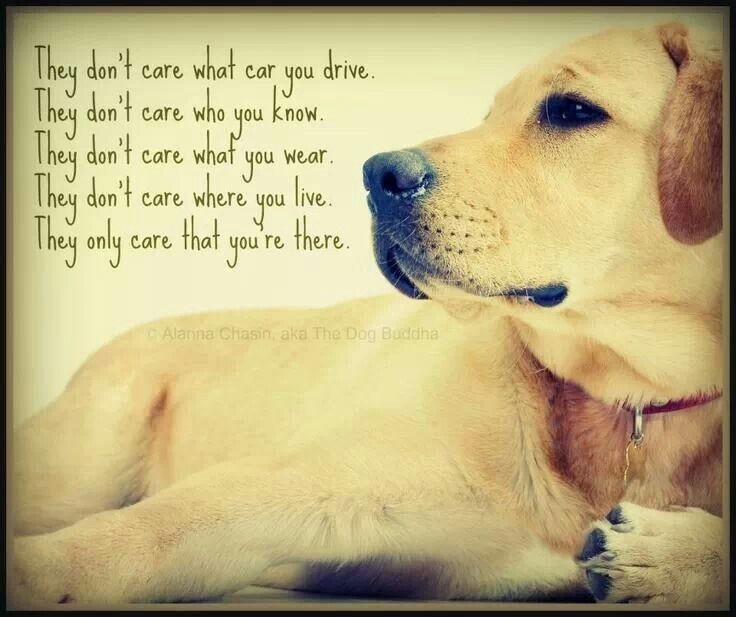 dog quotes 14