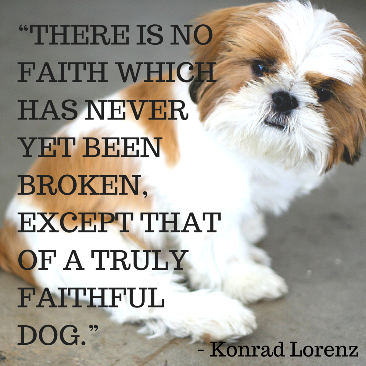 dog quotes 15