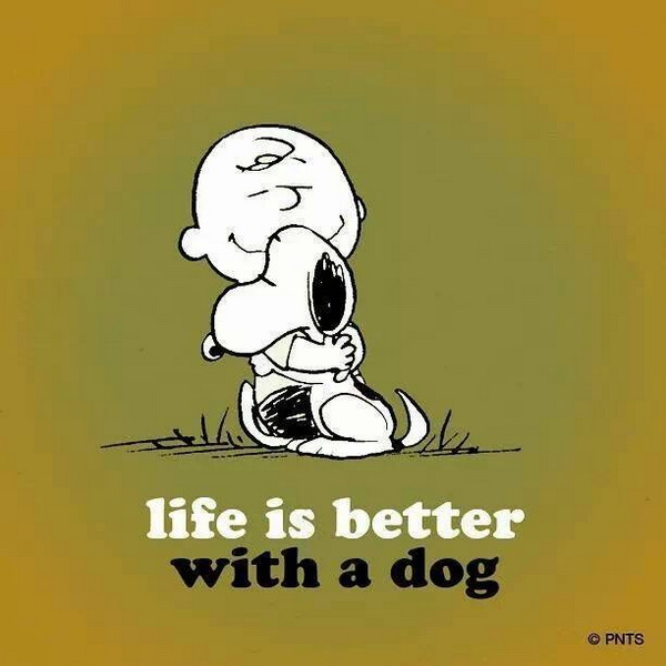 dog quotes 16