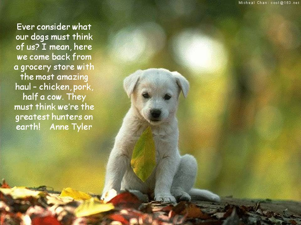 dog quotes 17