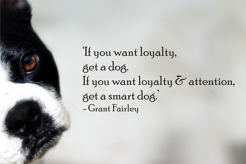 dog quotes 19