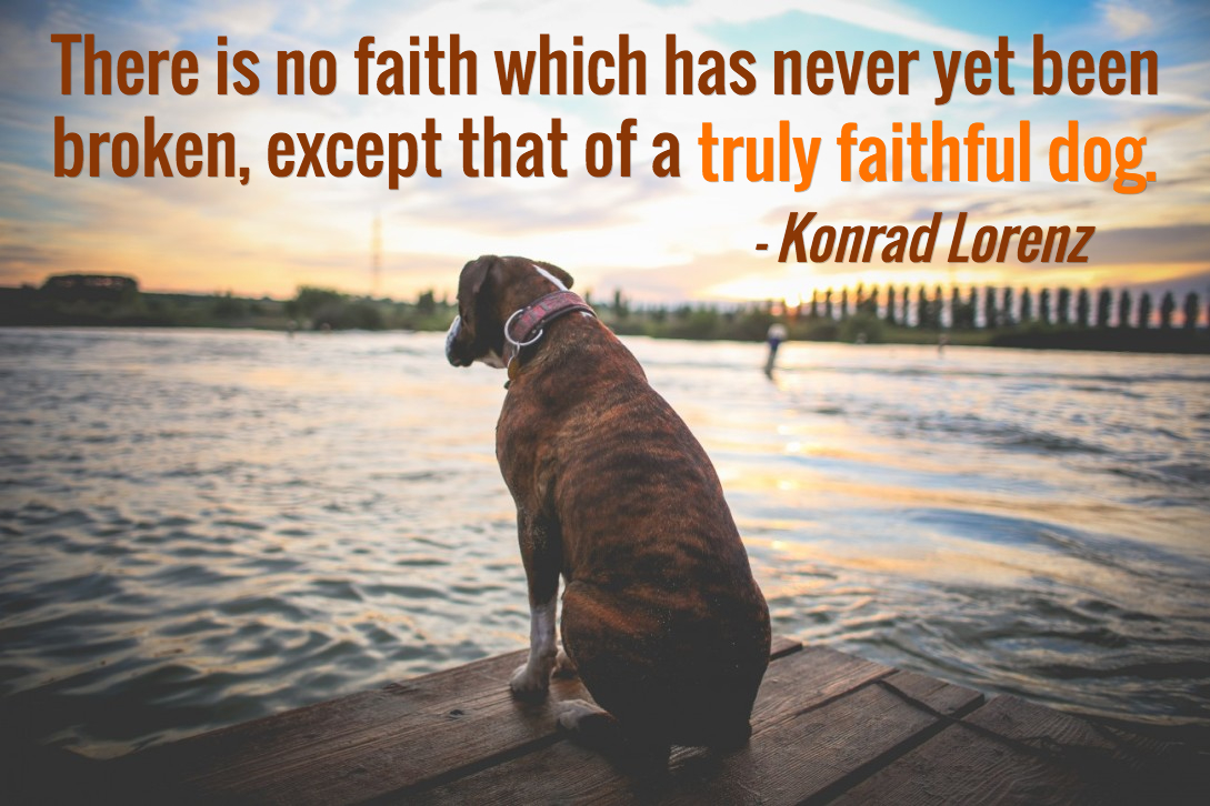 dog quotes 20