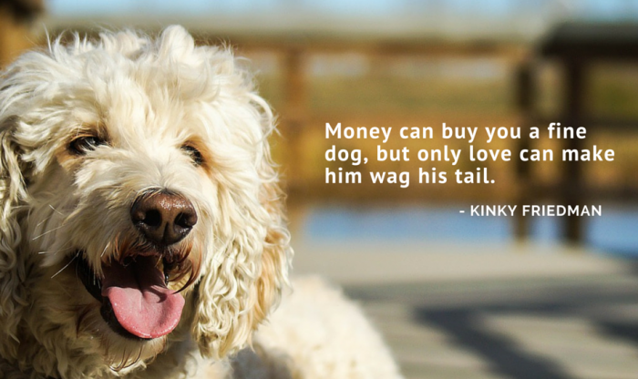 dog quotes 23