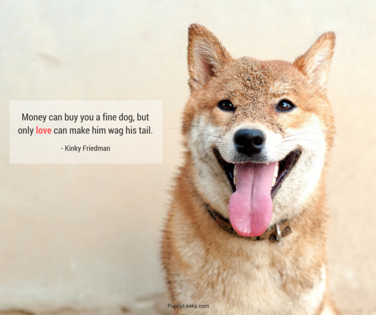 dog quotes 24
