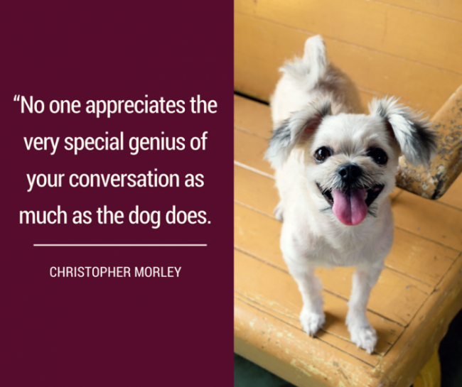 dog quotes 25