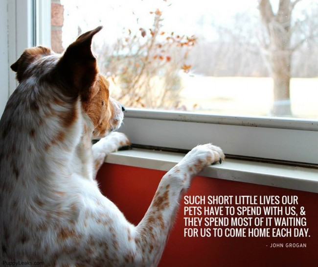 dog quotes 26