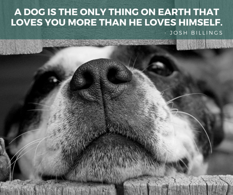 dog quotes 28