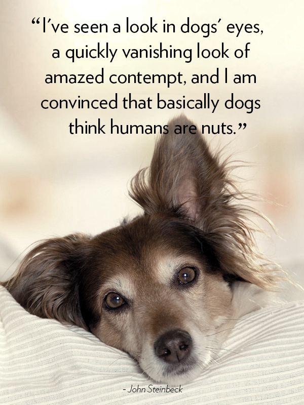 dog quotes 30