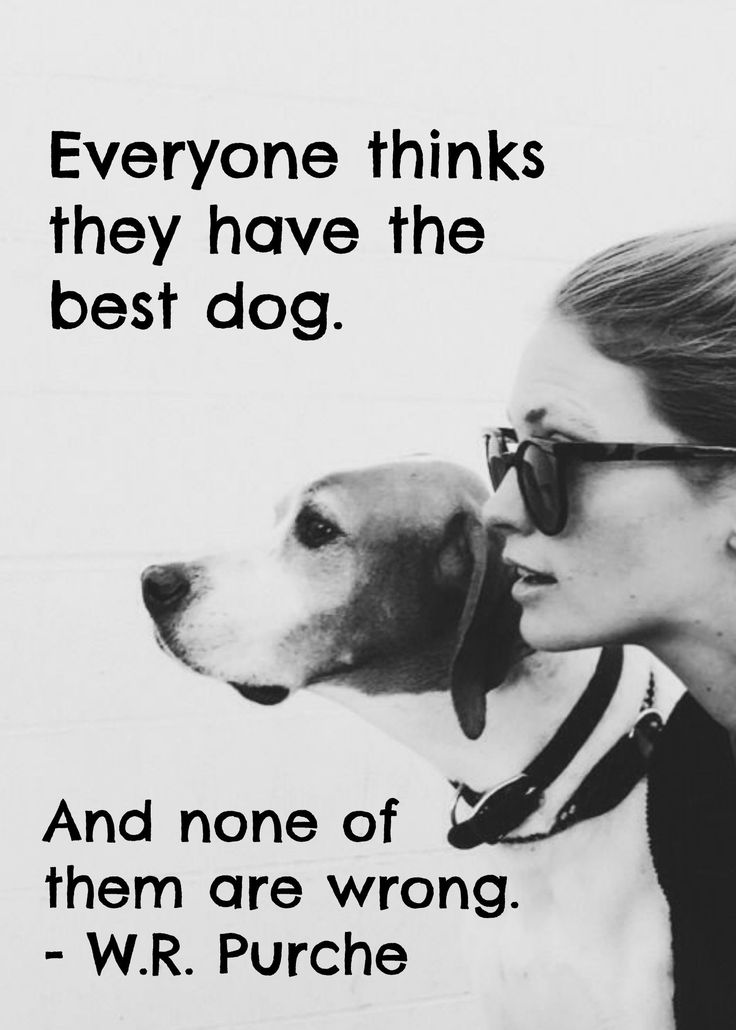 dog quotes 34