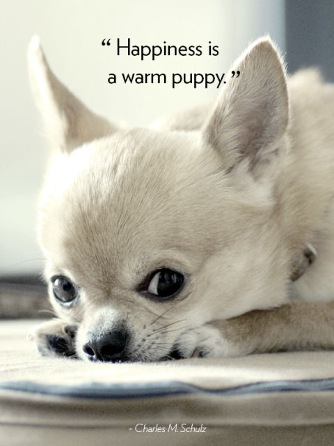 dog quotes 35