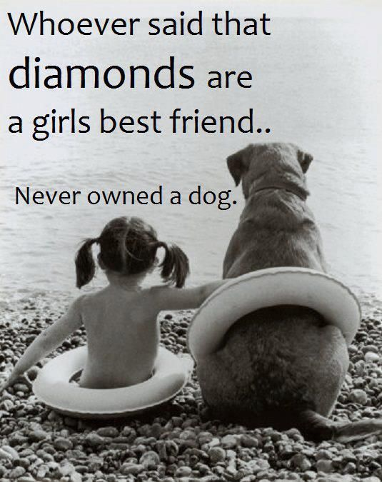dog quotes 36