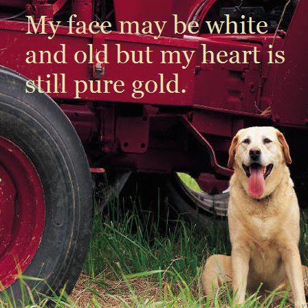 dog quotes 38