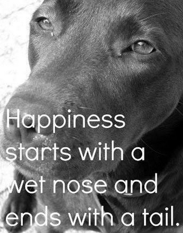 dog quotes 40