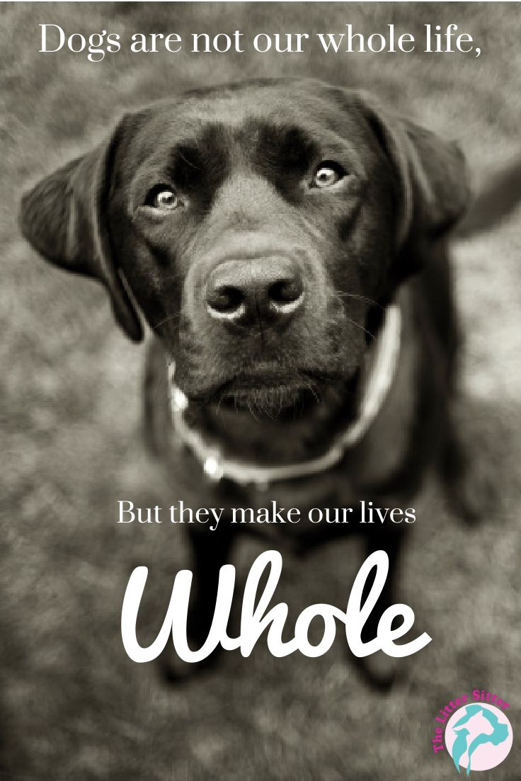 dog quotes 43