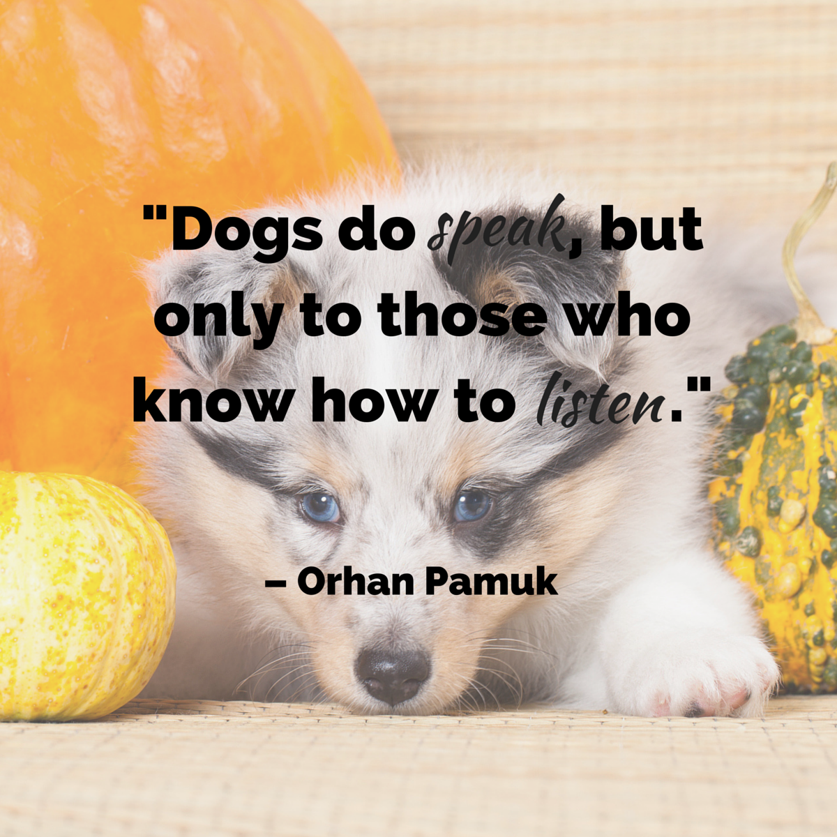 dog quotes 45