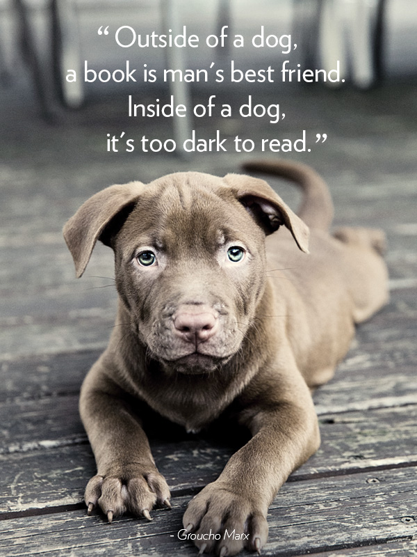 dog quotes 46