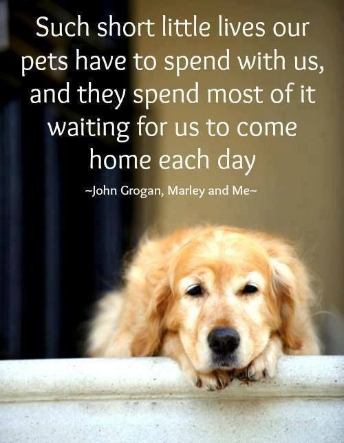 dog quotes 47