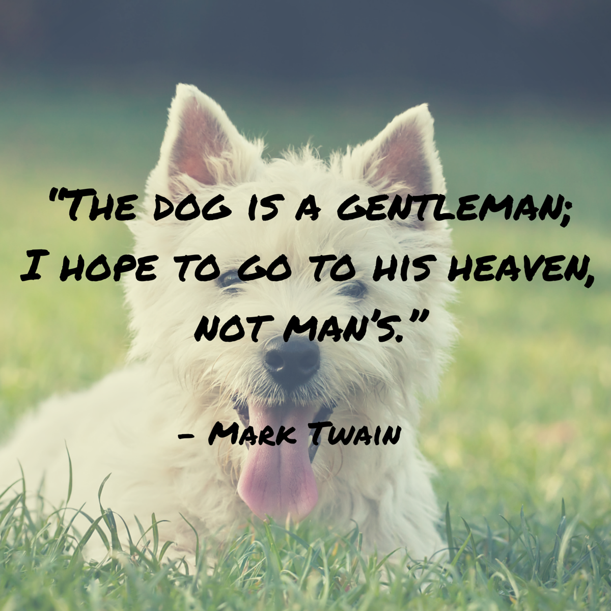 dog quotes 48