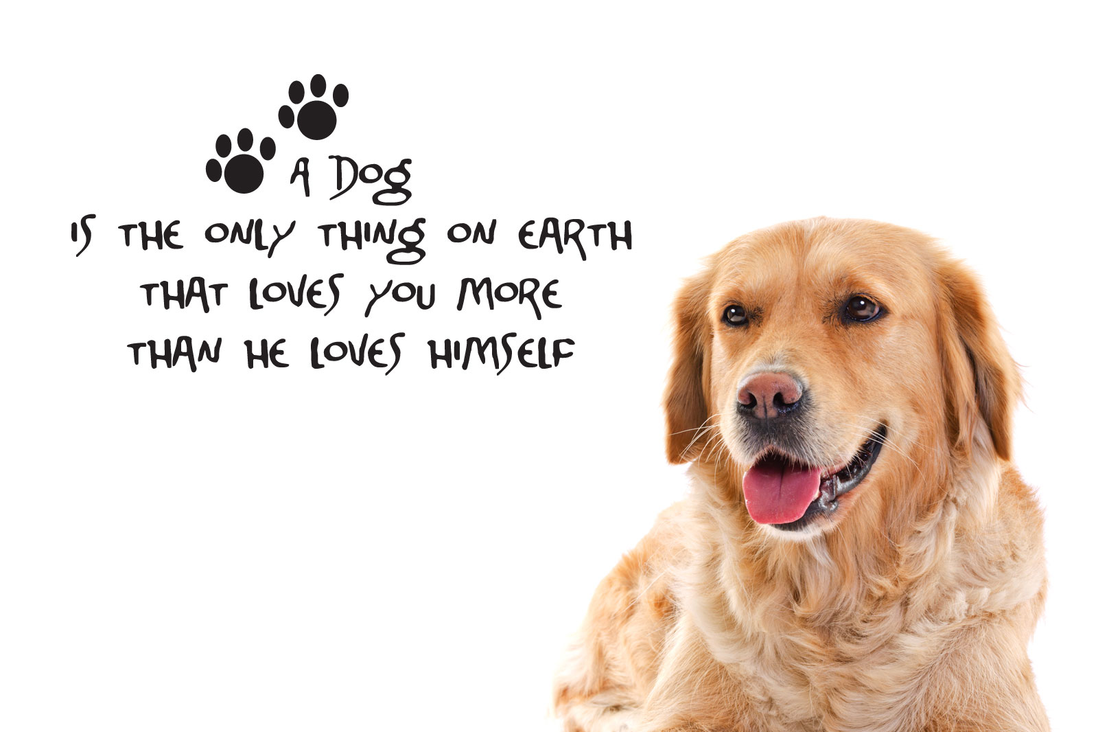 dog quotes 50