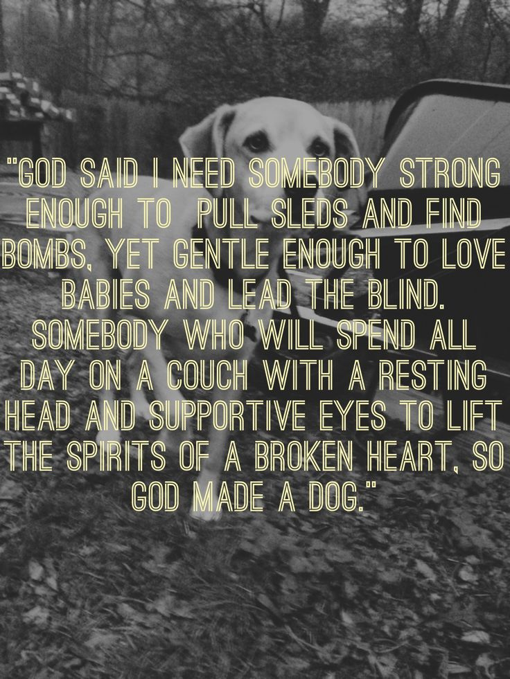 dog quotes 6