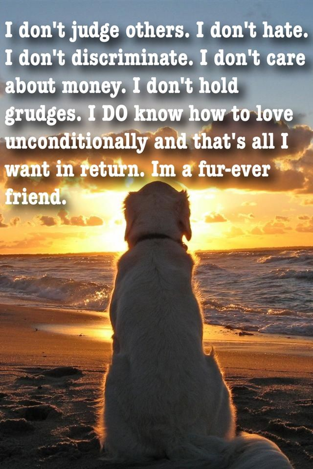 dog quotes 7