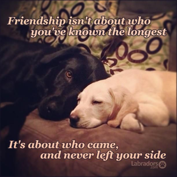 dog quotes 8