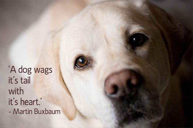 dog quotes 9