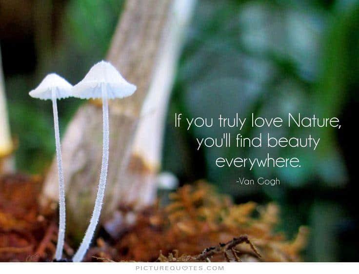 nature quote 33