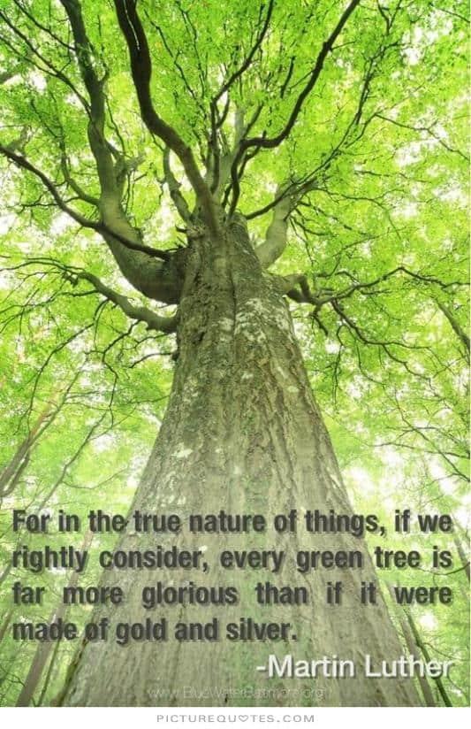 nature quote 36