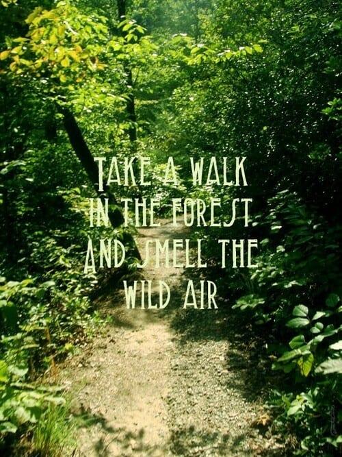 nature quote 47