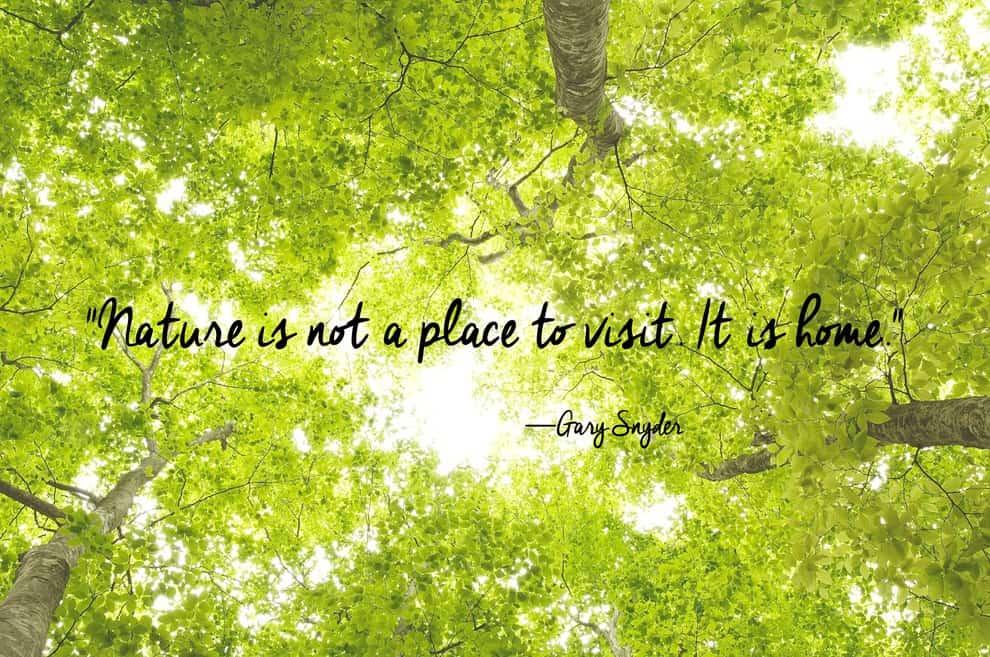 nature quotes 41