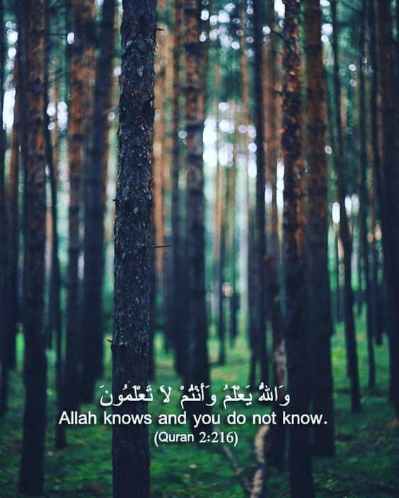 quran quotes 16