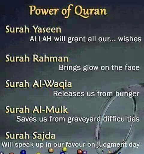 50 wise quran quotes to lead you through life