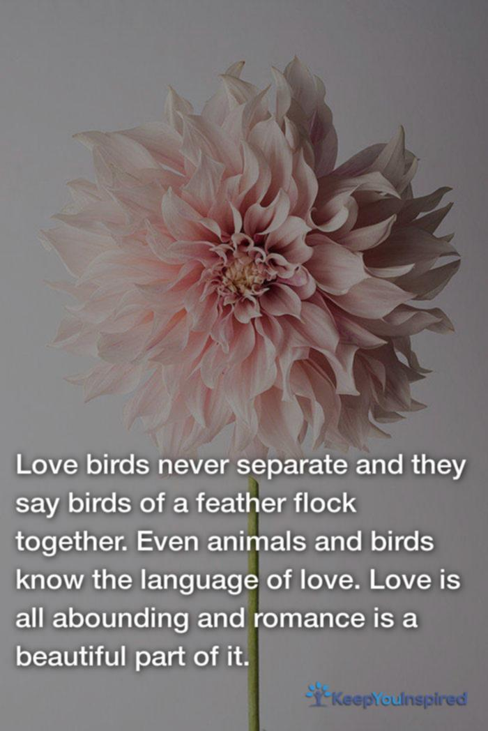 soulmate quotes 26