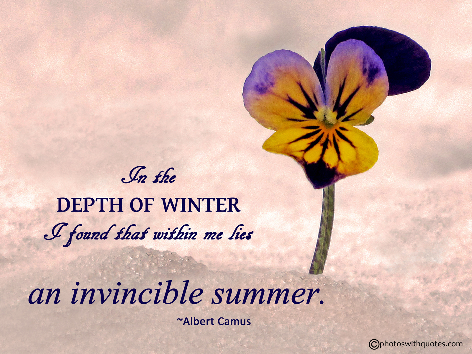 summer quotes 29