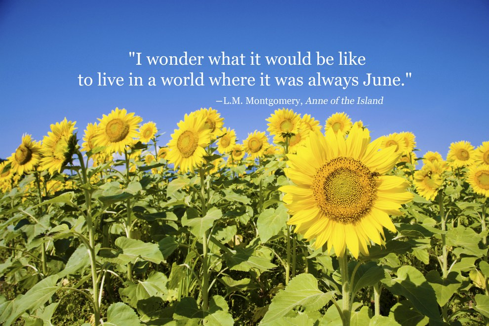 summer quotes 4