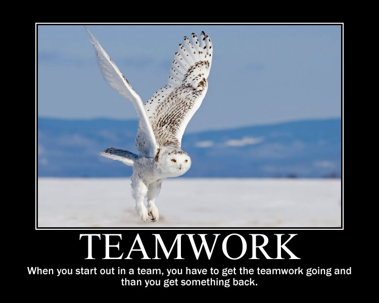 teamwork quotes 39