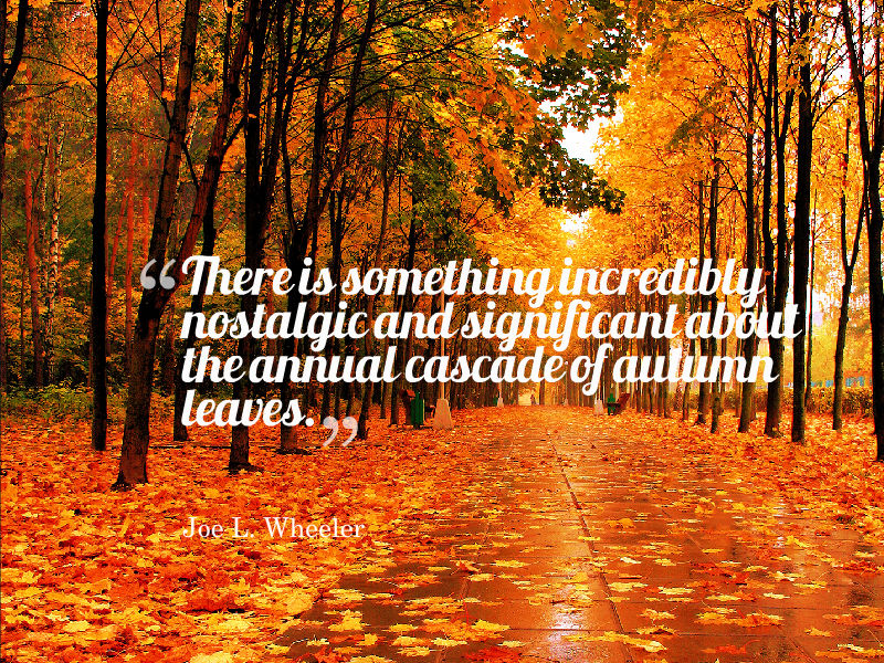 fall quotes 18