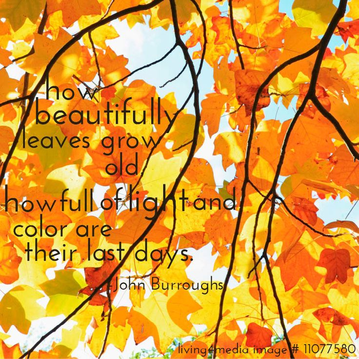 fall quotes 7