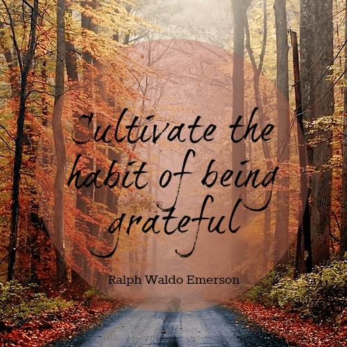 gratitude quotes 29